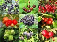 Vitaminreiche Wildfrüchte vor unserer Haustür