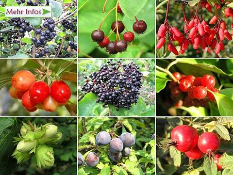 Wildfruchthecke mit 10 pflanzen angebot wildfruchthecke 10 pflanzen